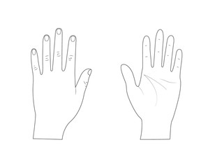 Woman hands.Back of the hand.Palm hand. Outline.Vector illustration. Isolated on white background.