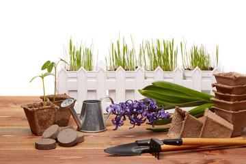 Gardening tools and seedlings.