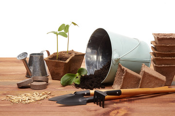 Gardening tools and seedlings.