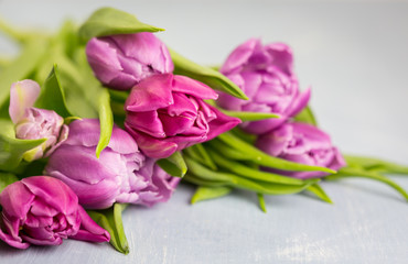 Bouquet of fresh pink spring tulips lying on a grey background with copy space for your greeting in a close up view of the flowers