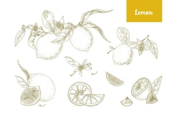 Set of elegant botanical drawings of whole and cut lemons, branches, flowers and leaves. Fresh juicy citrus fruit hand drawn with contour lines on white background. Monochrome vector illustration.