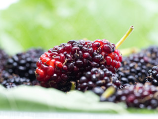 Clouse up of mulberries group with a leaves. Mulberry this a fruit and can be eaten.
