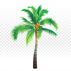Palm tree on white and transparent background