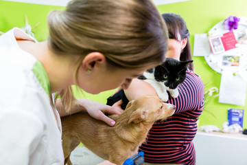 Cat and dog together at vet or pet grooming