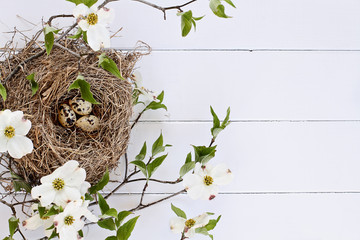 Bird Nest and Eggs with White Flowering Dogwood