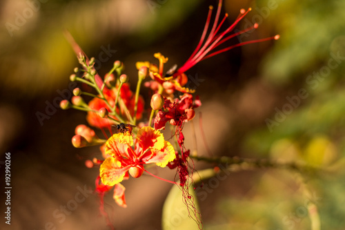 Pretty orange yellow and red flowers in costa rica stock photo pretty orange yellow and red flowers in costa rica mightylinksfo