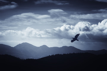 bird flying over hills and mountains in fantastic landscape