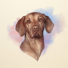 Illustration of a Vizsla dog. Weimaraner. Dog is man's best friend. Animal collection: Dogs. Watercolor Dog Pug Portrait - Hand Painted Illustration of Pets. Art background for banner, cover, card.