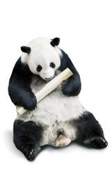 Fotobehang Panda Panda eating bamboo isolated over white