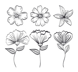 set flowers rustic and monochrome decoration, vector illustration design