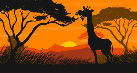Silhouette scene with giraffe eating leaves