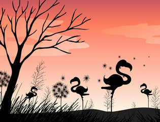 Silhouette scene with flamingo in the field