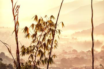 Bamboo in Foggy Landscape, Pokhara, Nepal