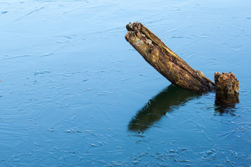 Stump in the thin ice