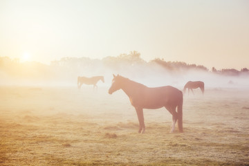Wall Mural - View of pasture with Arabian horse grazing in the sunlight. Beauty world. Soft filter. Warm toning effect.