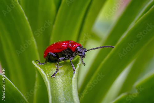 Bug Hahn