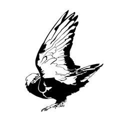 Pigeon Graphic Vector Illustration Silhouette