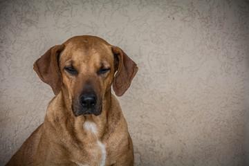 Bob Dog