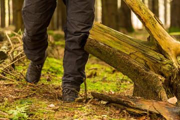 Vandring i skogen med känger