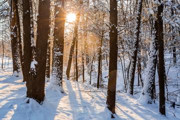 Winter sunrise forest snow with warm orange light