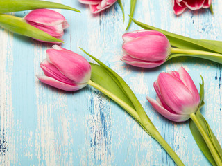 Pink tulip flowers on blue wooden background, copy space. Beautiful bouquet