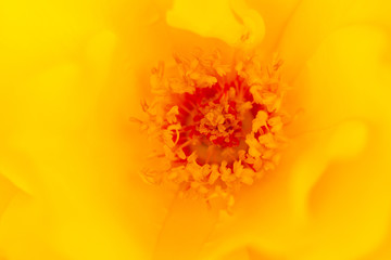 Flower, Yellow, Macro