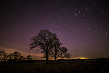 Silhouettes of trees with a sky and stars as background