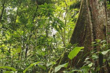 Inside a tropical jungle Henri Pittier National Park Venezuela