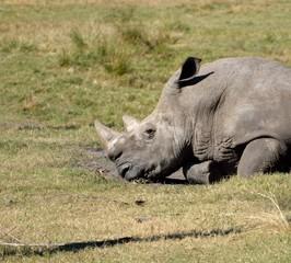 Rhinoceros at wildlife reserve