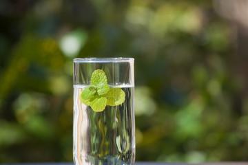 コップの水とミント