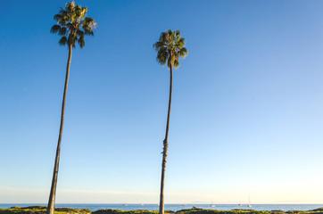 California high palms on the beach, blue sky background