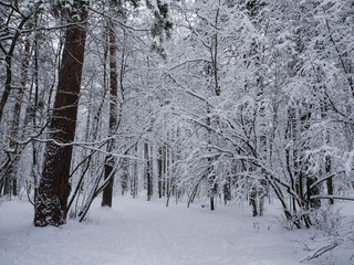 Very a handsome winter wood.