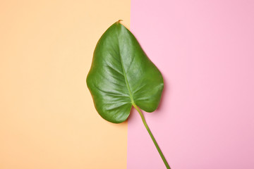 Tropical leaf on color background, top view