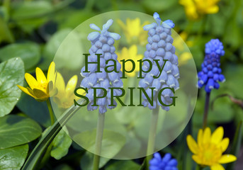 Happy Spring.Bright spring flowers background with text.Springtime concept.Selective focus.