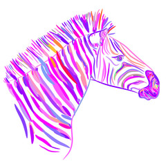 Rainbow pink Zebra portrait, Head sketch isolated on white background. Vector