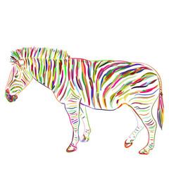Rainbow Zebra portrait sketch isolated on white background. Vector