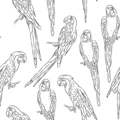 macaw sketch seamless pattern isolated on white background. Textile print, web page fill. Vector