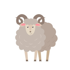 Sheep vector flat illustration isolated on white background. Farm animal lamb cartoon character.