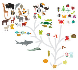Evolution scale from unicellular organism to mammals. Evolution in biology, scheme evolution of animals isolated on white background. children's education, science. Vector
