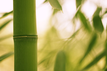 Bamboo park, close-up.