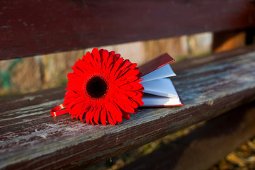 Red flower and a book on a bench