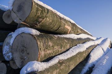 Polter gestapelte gefällte Baumstämme im Winter mit  Schnee, strahlendem Sonnenschein für Holzwirtschaft