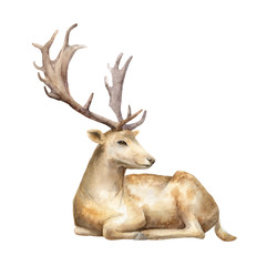 Male deer. Watercolor illustration. Isolated background