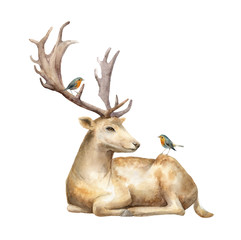 Male deer with birds Robin. Watercolor illustration. Isolated background