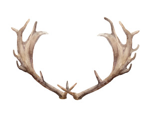 Horns of a deer male on isolated white background. Watercolor Template element for design.