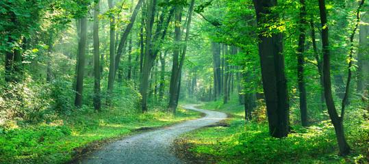 Wanderweg windet sich durch sonnigen grünen Wald