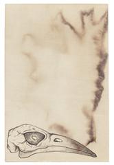 Old vintage paper with bird skull. Grunge background