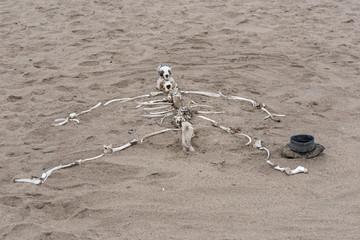 human skeleton built from animal bones on the Skeleton Coast in Namibia