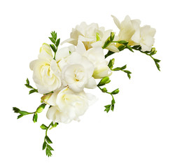 White freesia flowers in a beautiful composition