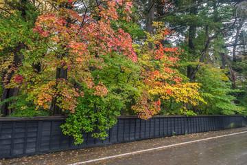 Autumn in kakunodate